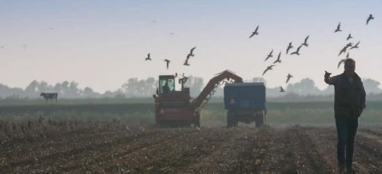 De kunst van het boeren - portfolio page