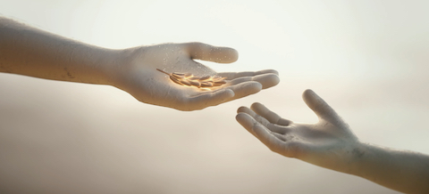 King Salman Relief - portfolio page